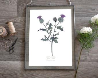 Spear Thistle, Scottish Botanical Wild Flower Watercolour, Illustration Art Print