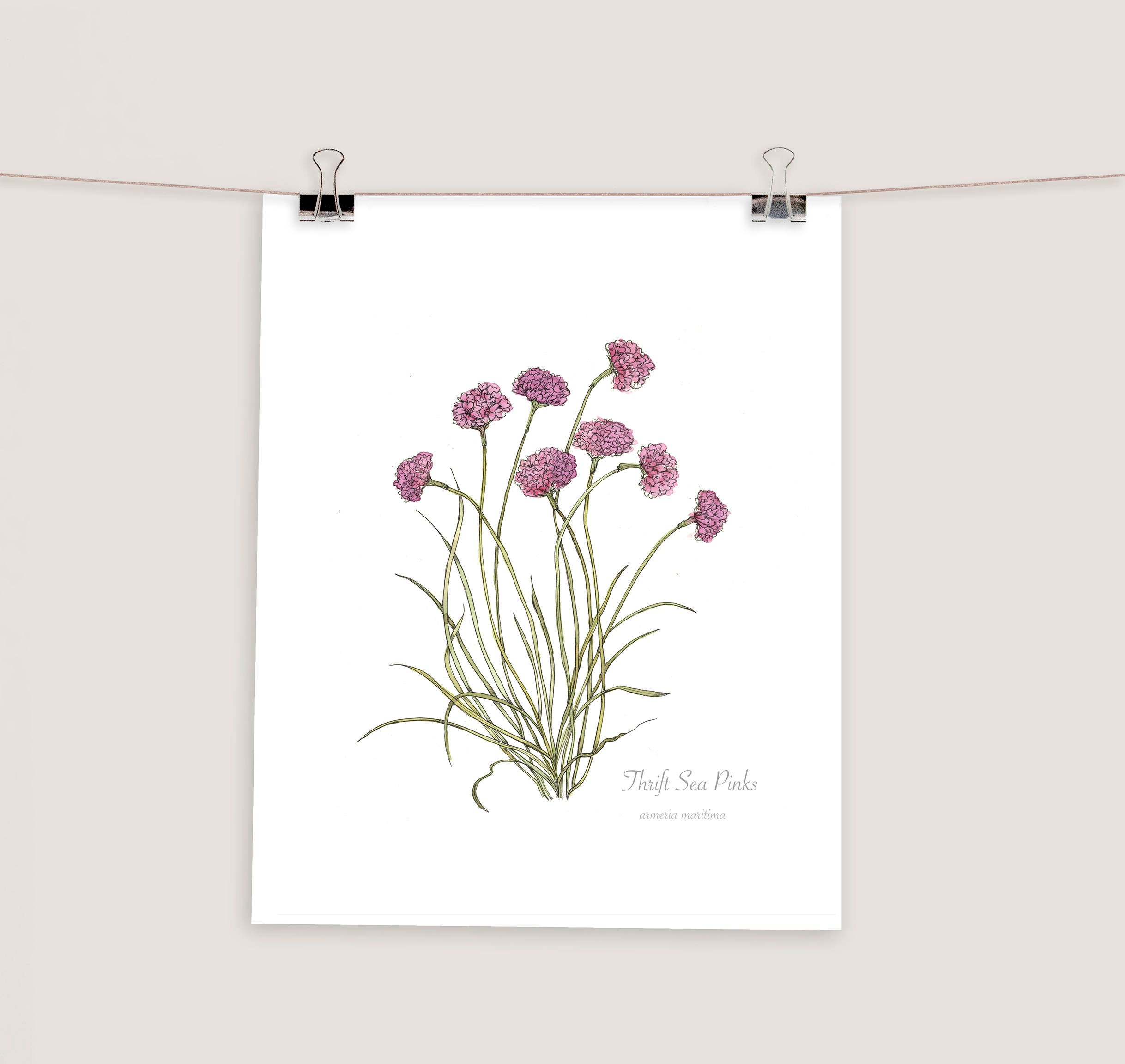 Thrift Sea Pinks Wild Flower Botanical Print Watercolour Etsy