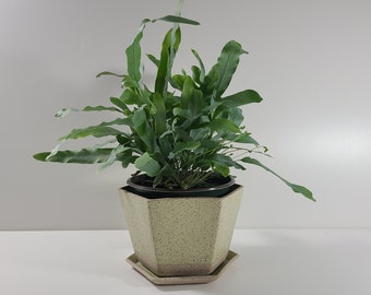 SECONDS Medium Hexagon Planter with Saucer - Lichen Matte Glaze  *Discounted 30% OFF*