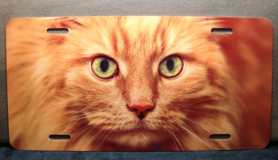 Orange Cat Eyes Photo License Plate