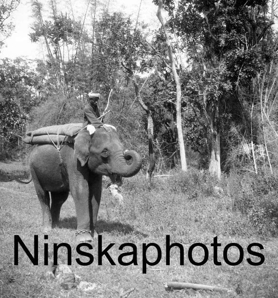Thanjavur, India, Man riding an Elephant, Tamil Nadu by J  Dearden Holmes,  1920s antique photo reprint - South India - Vintage Photo