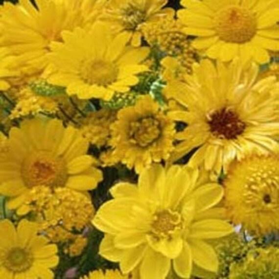 Yellow shades of color flower seedswildflowerannual 75 etsy image 0 mightylinksfo
