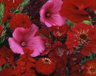 Red Shades of Color Flower Seeds/Wildflower/Annual   75+