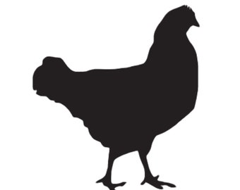 Pack of 3 Chicken Style 2 Stencils Made from 4 Ply Mat Board, 16x20, 11x14 and 8x10 -Package includes One of Each Size