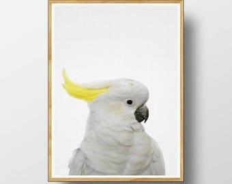 Australian Cockatoo, Cockatoo Print,  Australian Bird Print, Australian Bird Wall Art, Australian Animal Print, Nursery Printable, Cockatoo