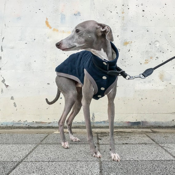 Italian Greyhound Clothing Quilted Vest Coat Outer Navy