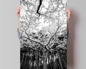 Nature Photography and Fine Art Photography of Sakura and Cherry Blossom. A Peaceful and Relaxing Black And White Giclee Art Print of Trees