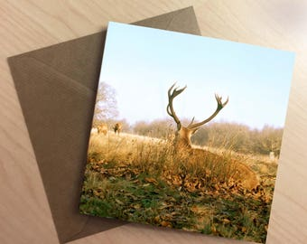 Greetings Card - Autumnal Red Stag