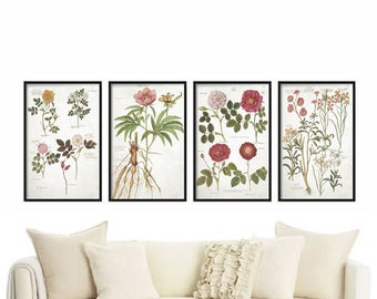 Botanical Print set of 4 -  Botanical Illustration - Vintage Print - Wall Art - Prints - Farmhouse Decor - Rustic Decor - Home Decor - Gift