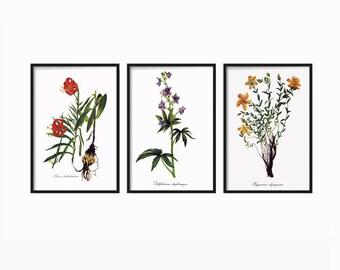 Botanical Print -  Botanical Illustration - Botanical Art - Wall Decor Art Vintage - Botanical Wall Print Decor - Print set of 3 - Wall Art