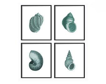 Seashell Print Set of 4 -  Shell Prints - Art Prints - Coastal Decor - Coastal Home Decor - Vintage Seashell Print - Beach Decor - Beach Art
