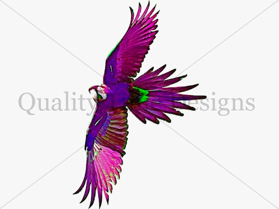 purple pink parrot macaw bird clipart solid and individual etsy