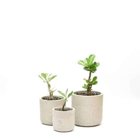 Set Of Three Cement Planter, Concrete Planters, Handmade Concrete Pot by Etsy