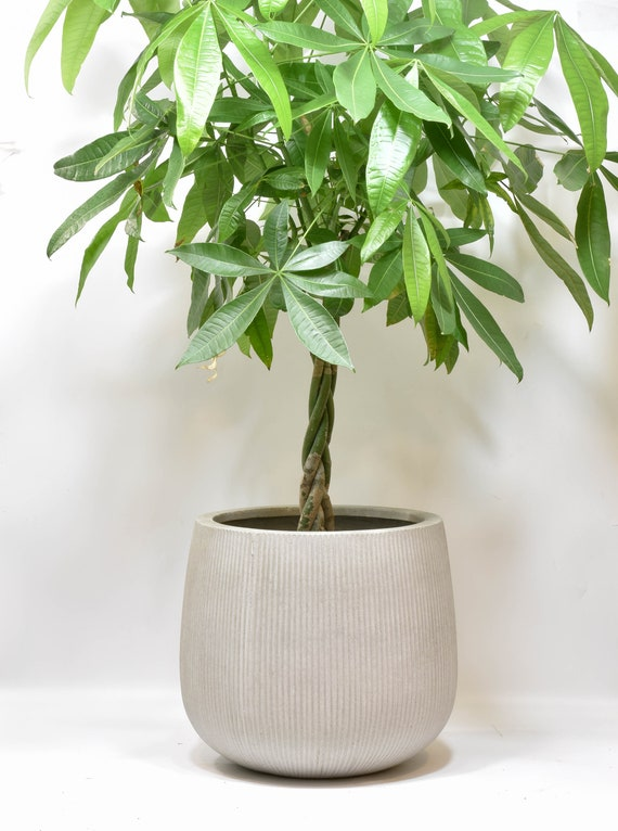 XXL - Cement Planter for House Plants, Concrete Planter, Handmade Modern Xxl Planters on