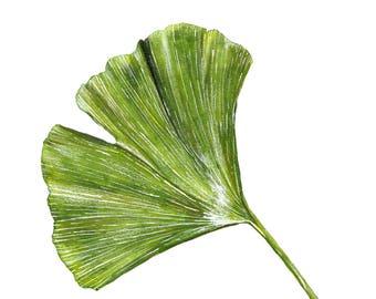 Ginkgo Leaf