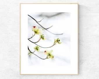 graphic about Legend of the Dogwood Tree Printable known as White dogwood flower Etsy