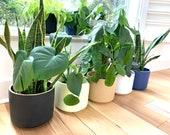 Planter - Plant Pot - Ceramic Stoneware - Minimalist - Curved Bottom - Indoor, Outdoor - 6, 8 inches diameter