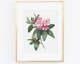 Botanical Prints Illustration Vintage Botanicals Flower Prints Giclee Rhododendron Print Set No Antique Botanicals Art Print 1