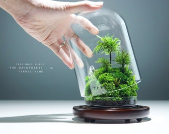 Ready-to-fly: The Rainforest ZERO (M), Botanical Sculpture, a Preserved Moss Terrarium by TerraLiving