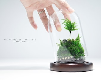 Ready-to-fly: The RainForest ZERO (S) - Tree Moss Edition, Preserved Moss Terrarium collection by TerraLiving