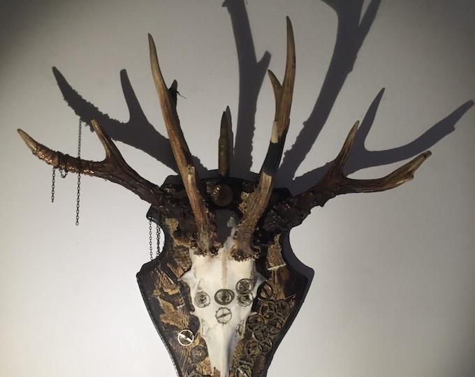 deer skull with added antlers