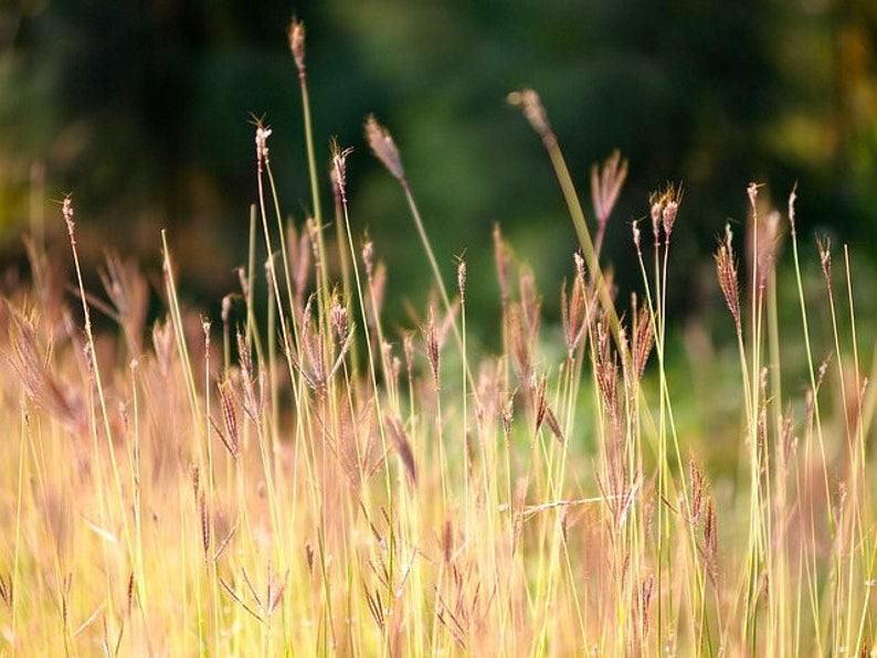 Grassy Meadow Wax Melt Wax Tarts Meadow Grass Scented Melt Scented Wax Cubes Blue Peacock Wax Candle Melts MEADOW Wax Melts