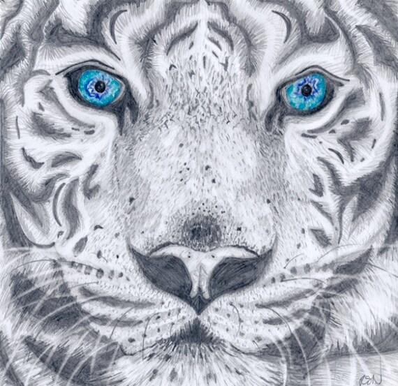 Tigre Blanc Dessin Au Crayon Etsy