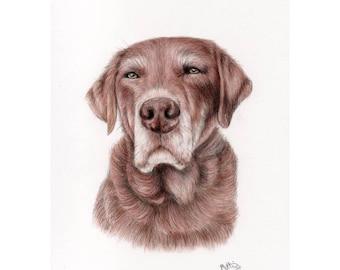 Pet Portrait, hand drawn pet portrait, pencil drawing, custom portrait, custom pet portrait, animal drawing, custom drawing, custom art, art