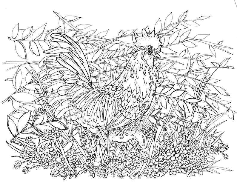 Adult Coloring Pages Advanced Coloring Art Rooster Chicken Etsy