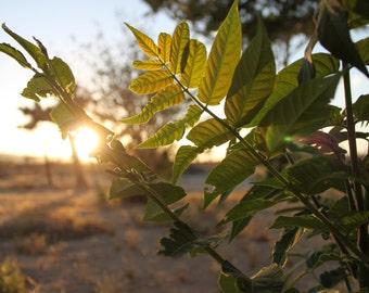 """8x10 """"Green Desert"""" Sunset Photograph"""
