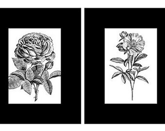 Two Black and White Vintage Flower Prints, Matted And Backed Ready To Frame
