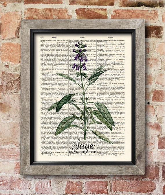 Kitchen Herb Print Sage Print Dictionary Art Print Old