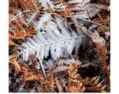 Frosted Fern / Winter Landscape Photography / Ashdown Forest / Christmas Image / Fern Leaf