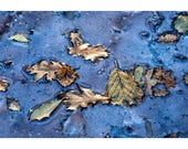 In Blue  - Leaves - Landscape Photography - Abstract Photography - Fine Art Print - Ashdown Forest