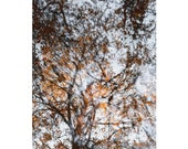 Copper Beech Reflected - Fine Art Photo - Landscape Photography - Abstract Photography - Woodlands