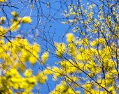 Blues and Yellows I  - Abstract - Landscape Photography - Abstract Photography