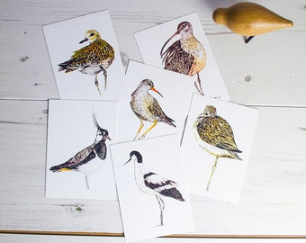 Box-set of six waders and shorebirds illustrated postcards