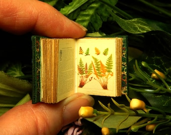 European Ferns : a miniature book in 12th scale, hand bound in green leather with full-colour antique illustration of European ferns