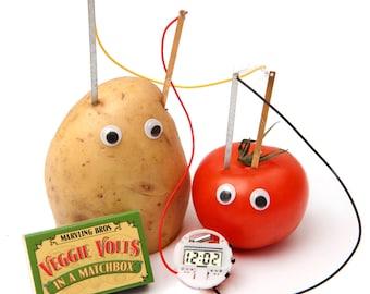 Vegetable Clock Science Kit In A Matchbox - Mini Science Kit - Educational Gift - Stocking Filler - Gift For Science Teacher - Kids Matchbox