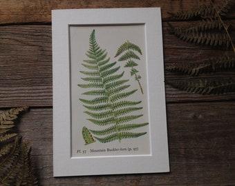 Vintage Fern Print - Watercolour Art - Botanical Art - Woodland Fern Fine Art - Illustrated Plant