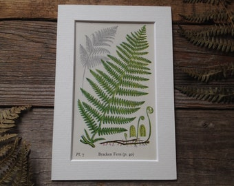 Vintage Fern Print - Watercolour Art - Botanical Art - Woodland Fern Fine Art - Illustrated Plant