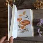 Natural History Guide to Mushrooms & Toadstools - Vintage Book - Watercolour Artist - Painting book - Creative gift