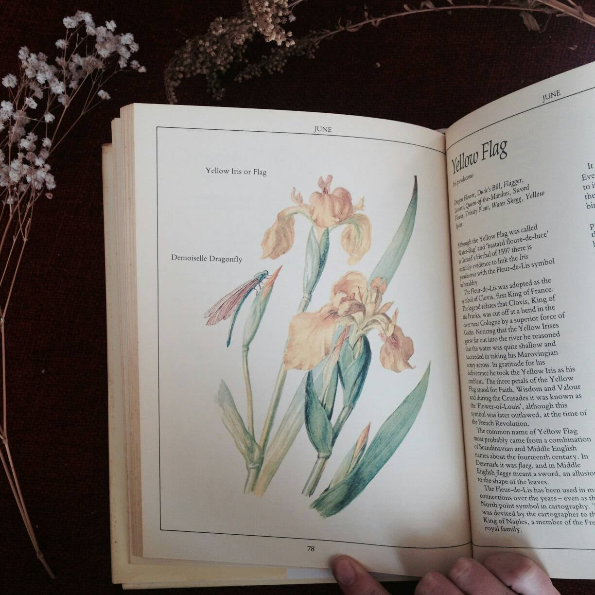 Country Diary Guide To Creating A Wildflower Garden Etsy