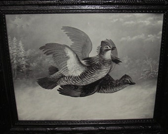 Antique Framed Fighting Grouse Print measuring 11.25 x 7.75 ~ Hunters Home Decor ~ Library Home Decor ~ Man Cave Decor ~ Lodge Cabin Decor