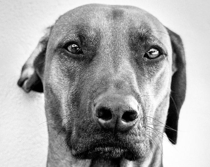DOG PORTRAIT PRINT, Dog Wall Art, Animal Art