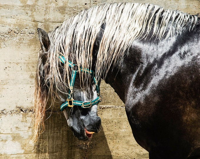 HORSE PRINT, Horse Wall Art, Black Beauty