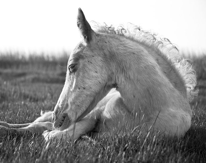 BLACK AND WHITE Foal Print