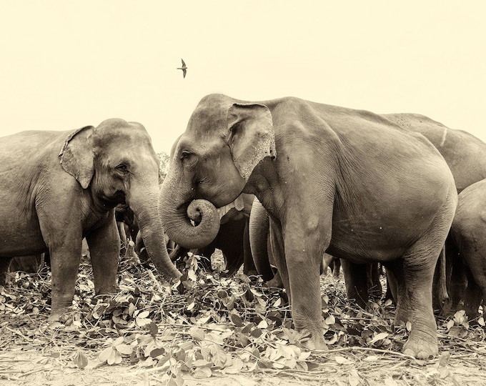 SRI LANKAN ELEPHANTS.  Elephants Prints, Sri Lanka Prints, Giclee Prints, Limited Edition Print, Photographic Prints, Wildlife prints, Sepia