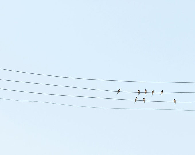 BIRDS ON A WIRE. Bird Print, Wildlife Picture, Swallows, Animals, Photographic Print