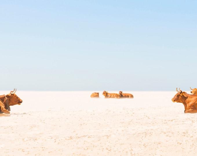 COW BEACH PRINT